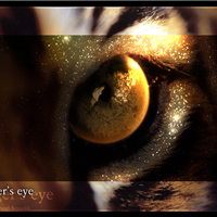 Eye 4 IMPACT